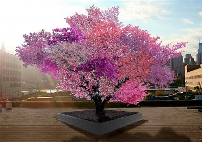 A Tree that Bears 40 Kinds of Fruits
