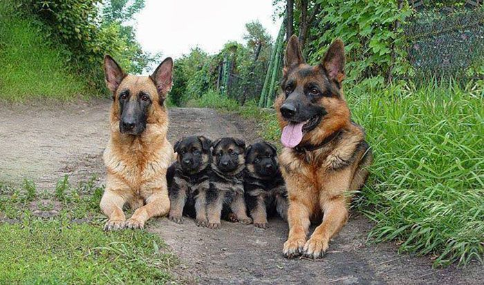 Adorable Animal Family Portraits