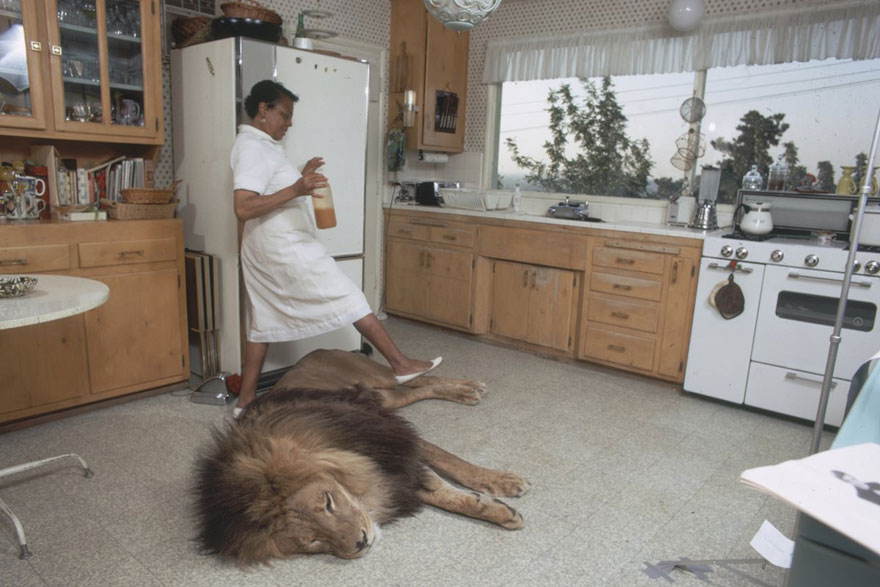 This Family Lived With A Real Lion Back In 1971
