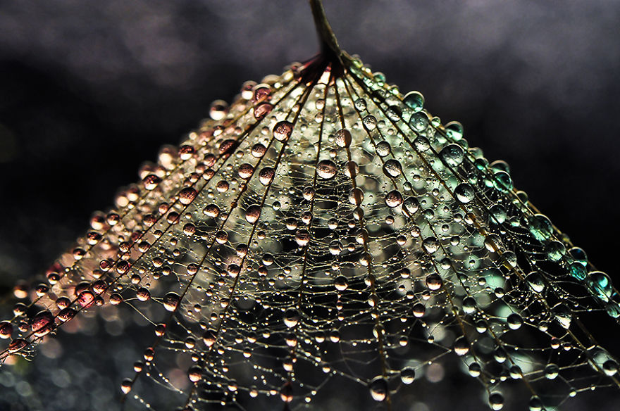 Macro Photography of Mesmerising Beauty Of Drops