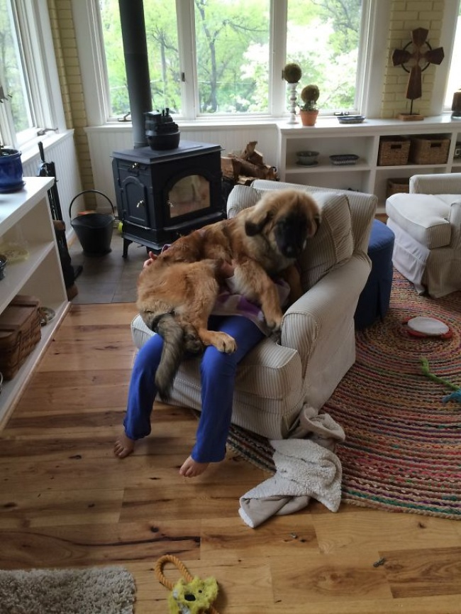 Hilarious Dogs with No Understanding of Personal Space