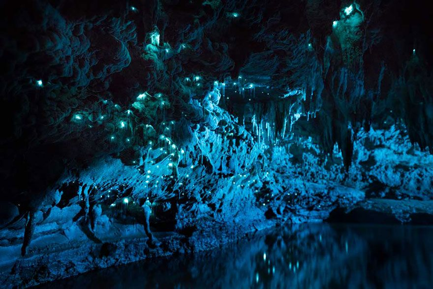 Long Exposure Photos Of Glowworms Look Like Starry Night