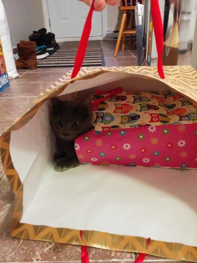 25 Pets Who Missed Whole Point Of These Simple Things
