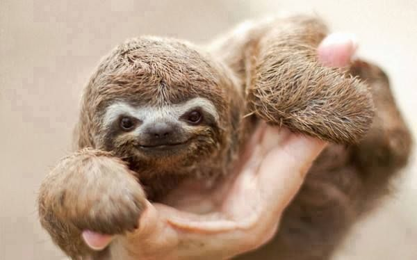 Baby Animals That Will Make You Go 'Aww'