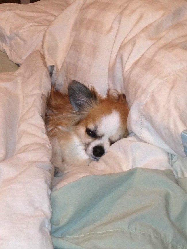 24 Adorable Guys Who Don't Want To Stop Sleeping