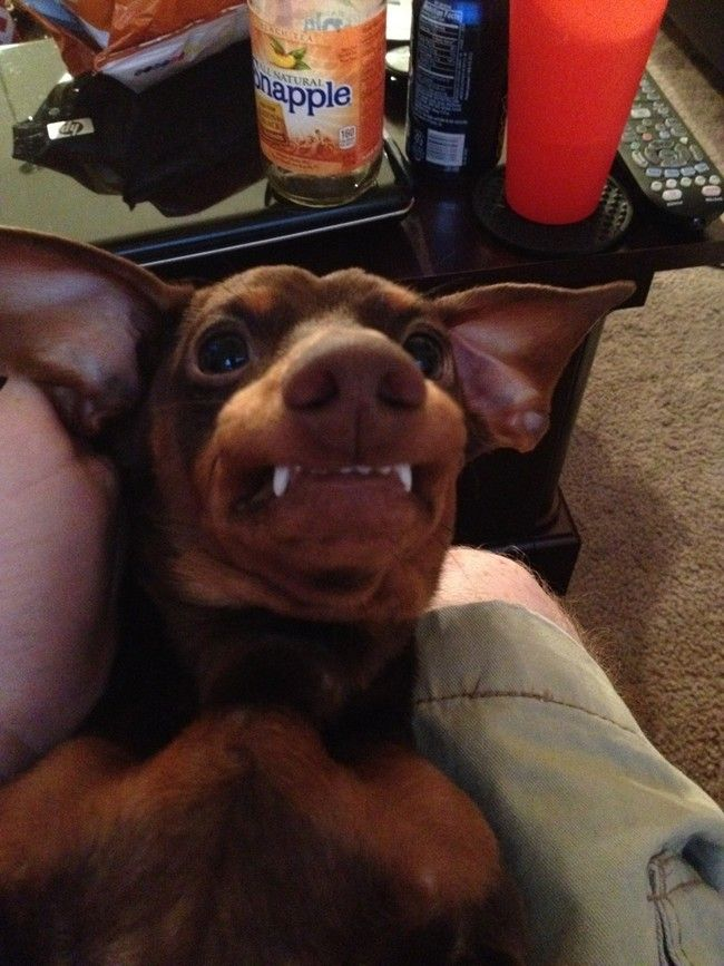 22 Dogs That Don't Actually Look Like Dogs