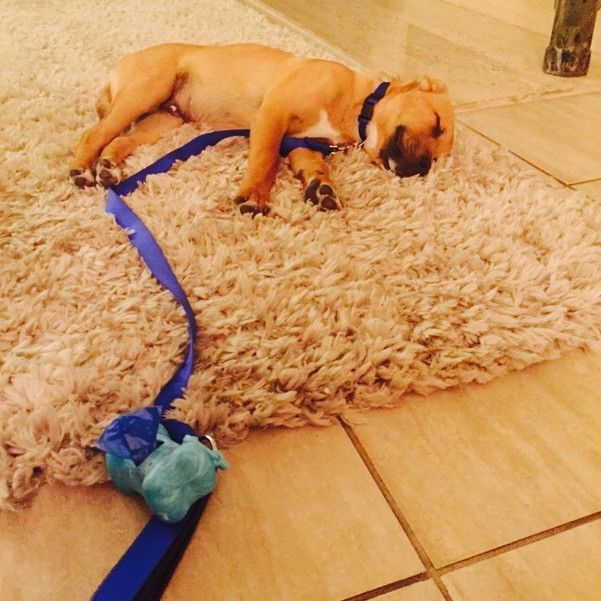 These Pups Are The Living Definition Of 'Exhausted.'