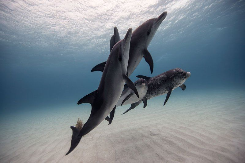 16 Breathtaking Underwater Animal Photos
