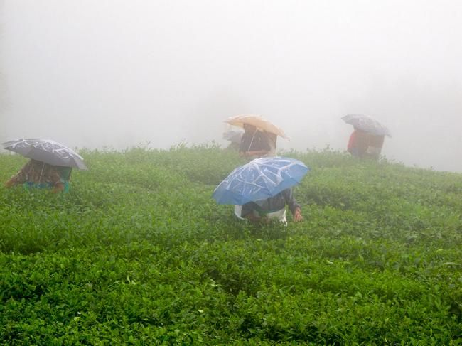 20 Places In India for Getting Drenched In The Rain