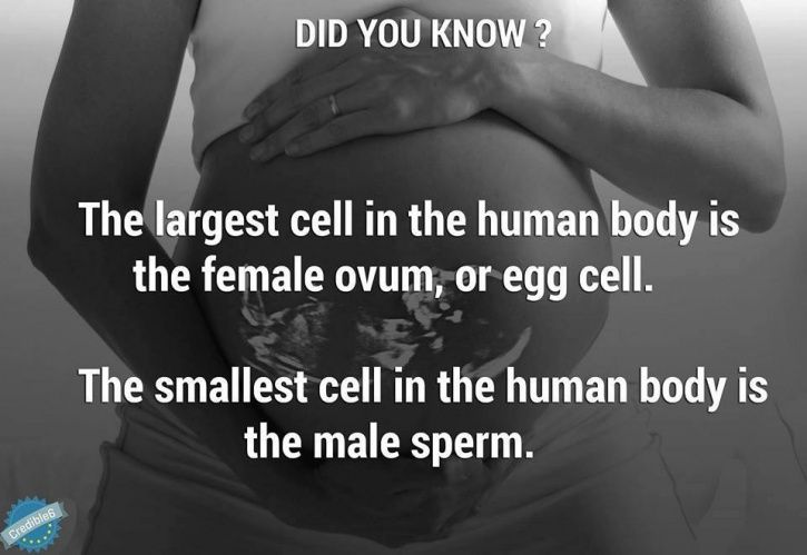 13 Facts About Babies In The Womb