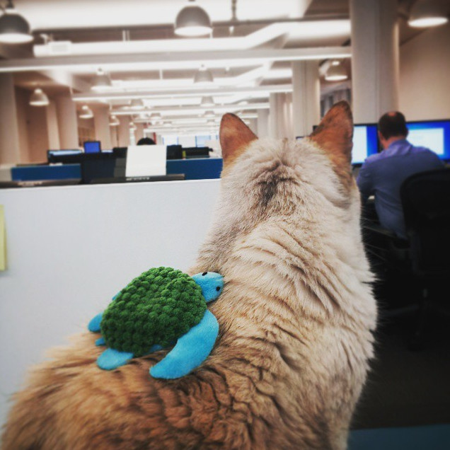 19 Animals at the Top Of the Corporate Ladder
