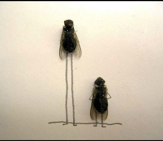Making People Laugh with Flies and Spare Time