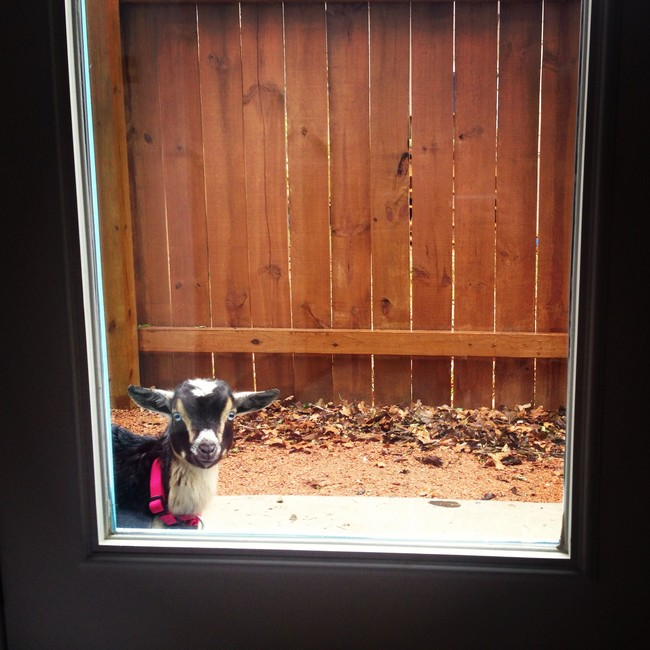 21 Hilarious Furry Guys Beg To Be Back Inside