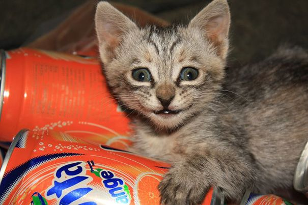 Smiliest Cats On The Internet