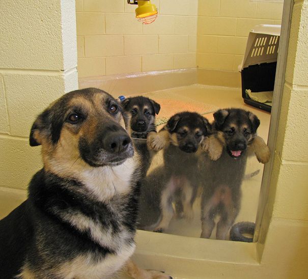 Proud Dog Mommies With Their Babies