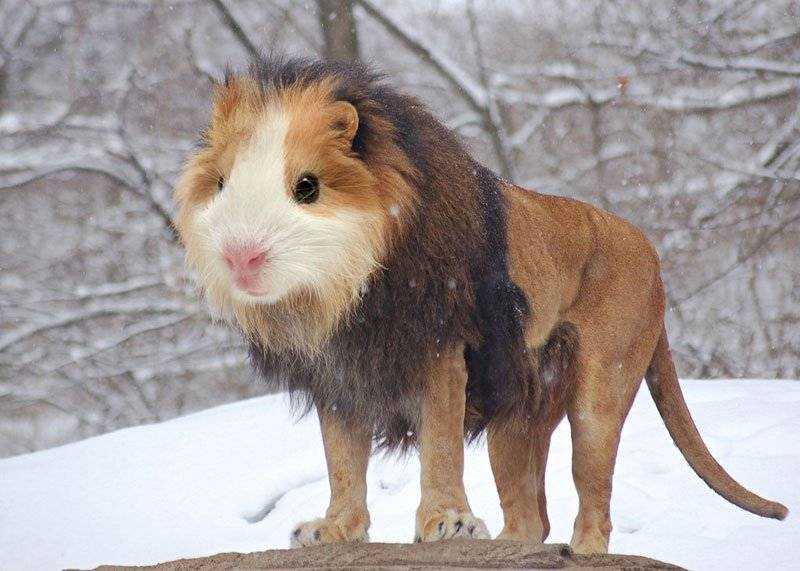 Photoshopped Animal Hybrids