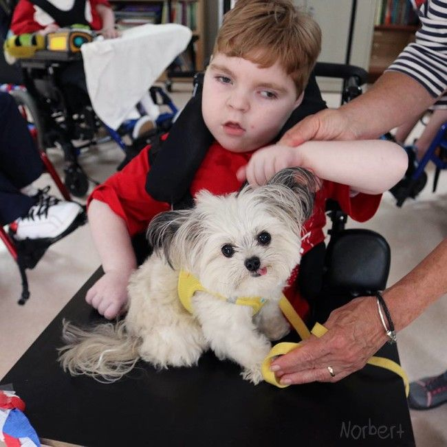 Unique Therapy Dog You'll Instantly Fall In Love With