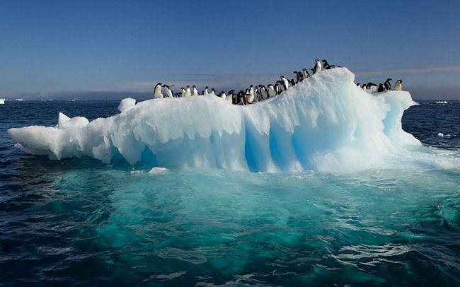 14 Reasons That'll Make You PLAN A Visit To Antarctica