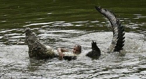 Unbelievable Friendship Between a Crocodile and a Human