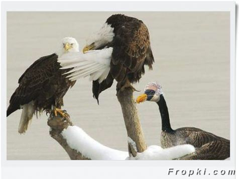 Ever Seen Cheating Animals?