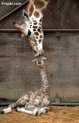 Animals' Capabilities to make you Laugh
