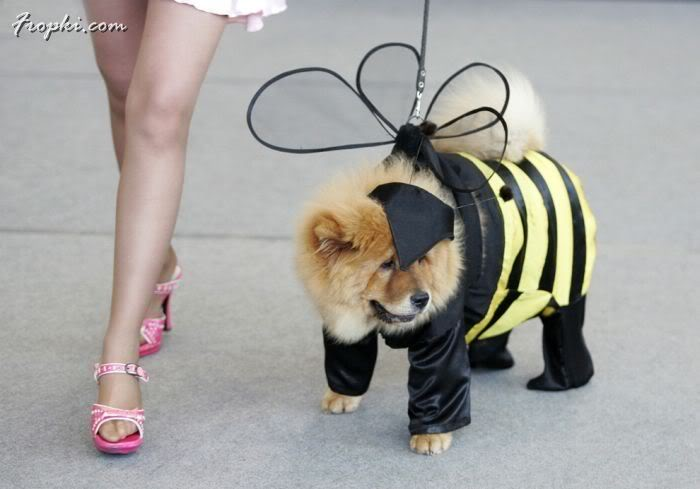 Well Dressed Up Dogs