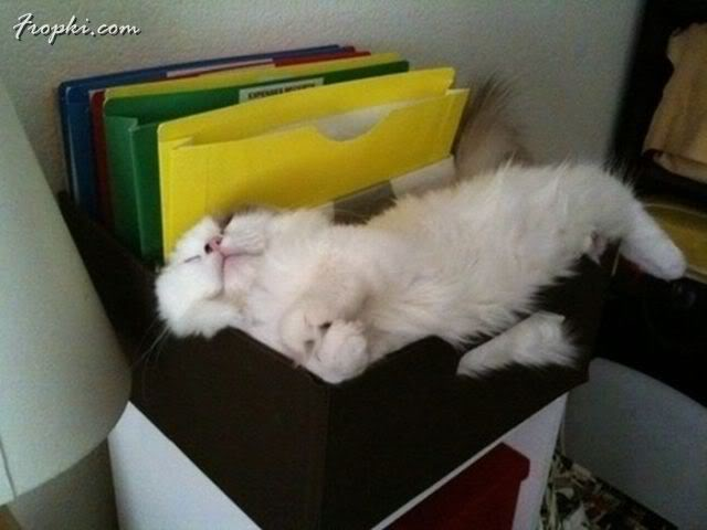 Cats Napping in Various Places