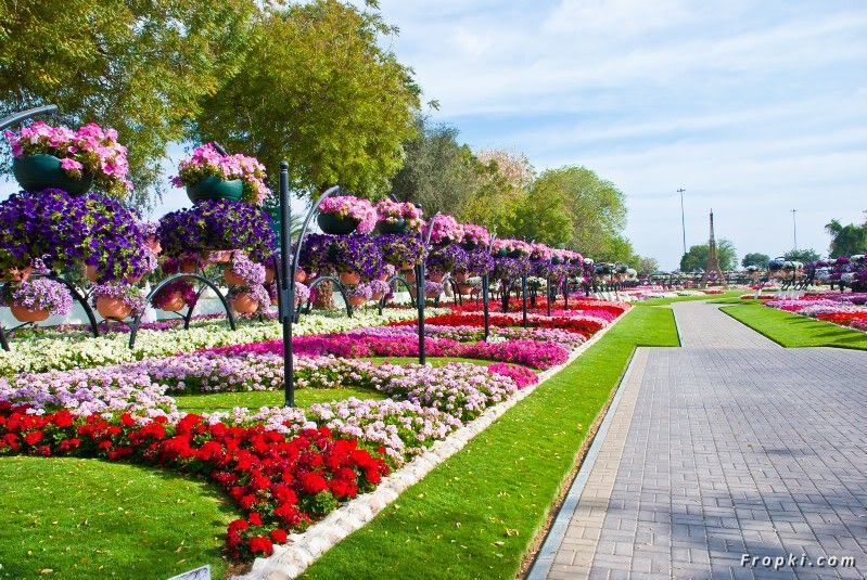 Beautiful flower park in dubai page 11 for Jardin floral