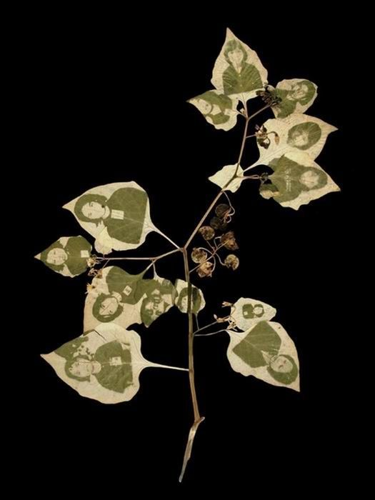 Photos on Leaves