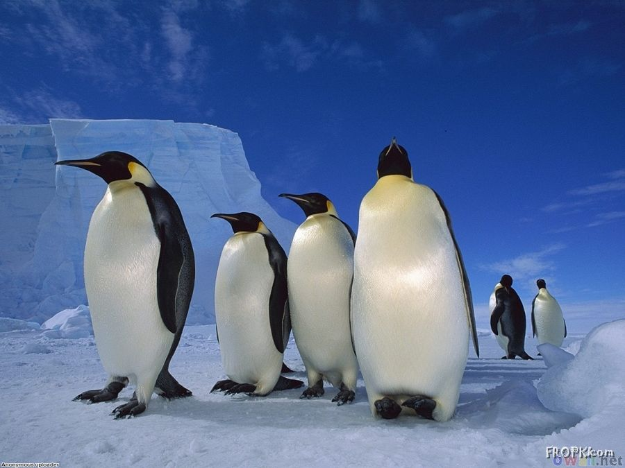 The Majestic Penguins