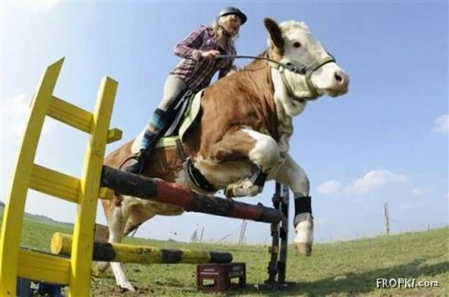 Super Jumping Cow