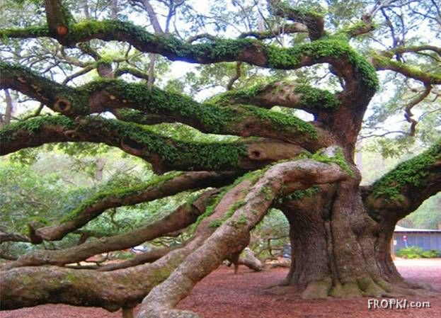 Most Unusual Trees - Real or Photoshopped?