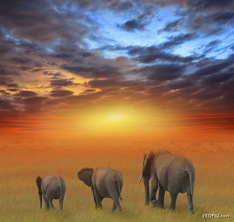 Admiring the Natural Beauty of Africa