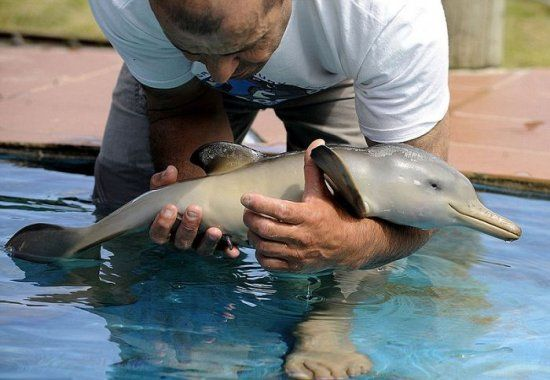 10-Day Old Baby Dolphin