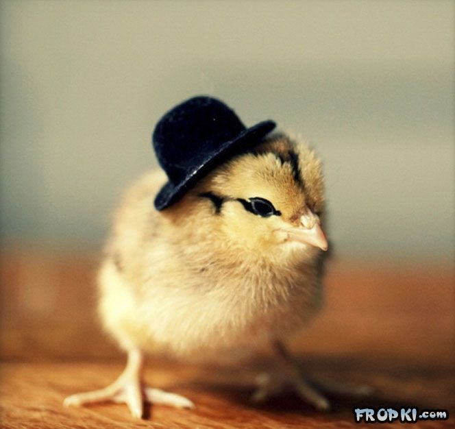 Cute Chicks in Hats