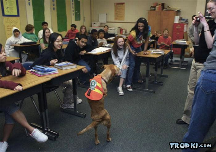 Very Smart and Clever Dog wid 2 Legs