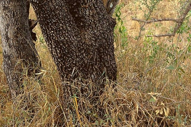 Perfectly camouflaged Animal Photos