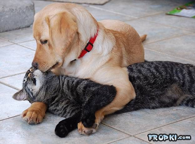 Every Dog Should Own a Cat (Made for each other)