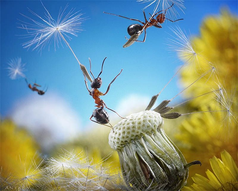 Real Ants in Fantasy Settings Landscapes