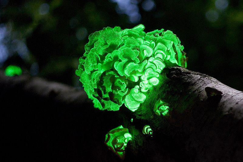 Most Facsinating Looking Fungi in the World