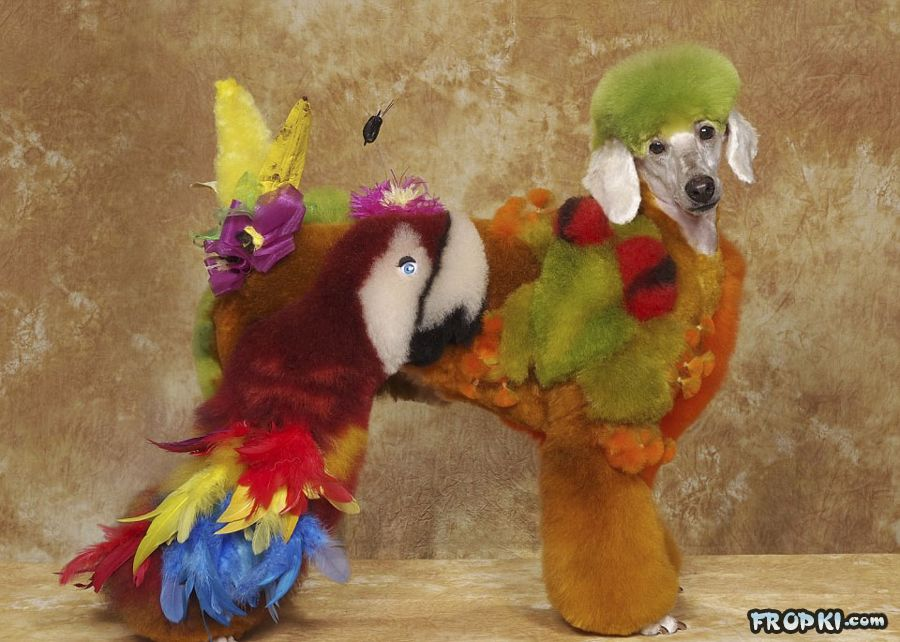 Crazy Dog Grooming Pageant