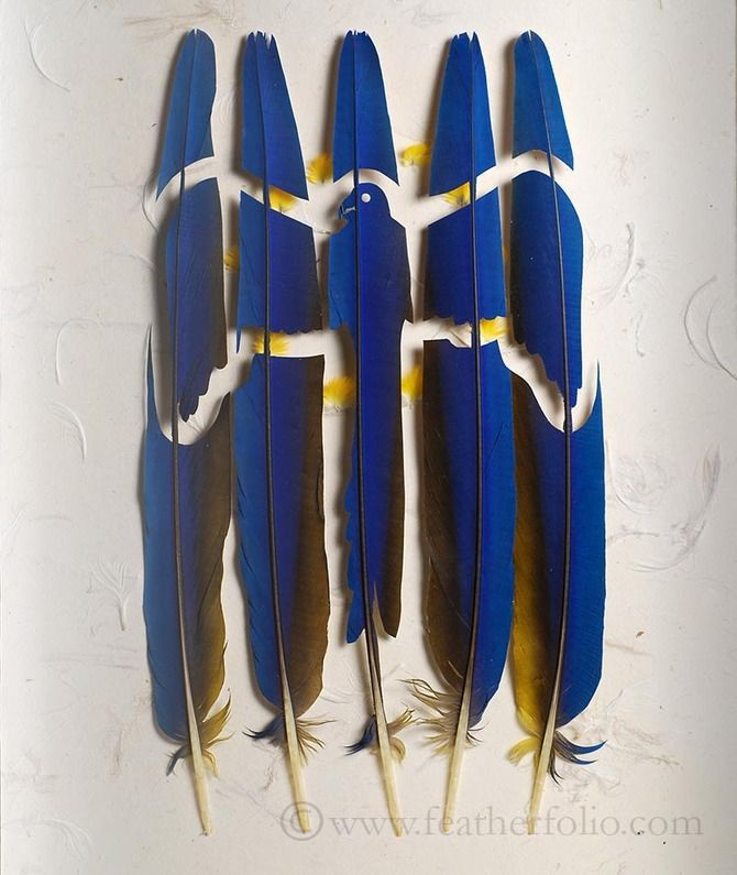 Meticulous Feather Art by Chris Maynard