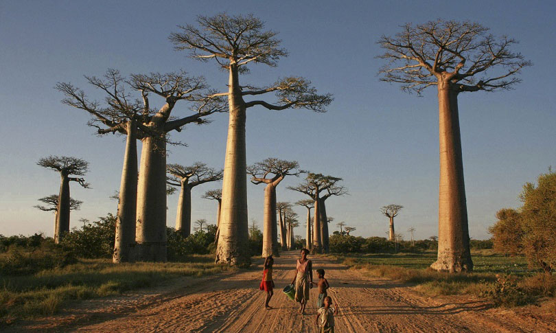 Most Amazing Trees in the World