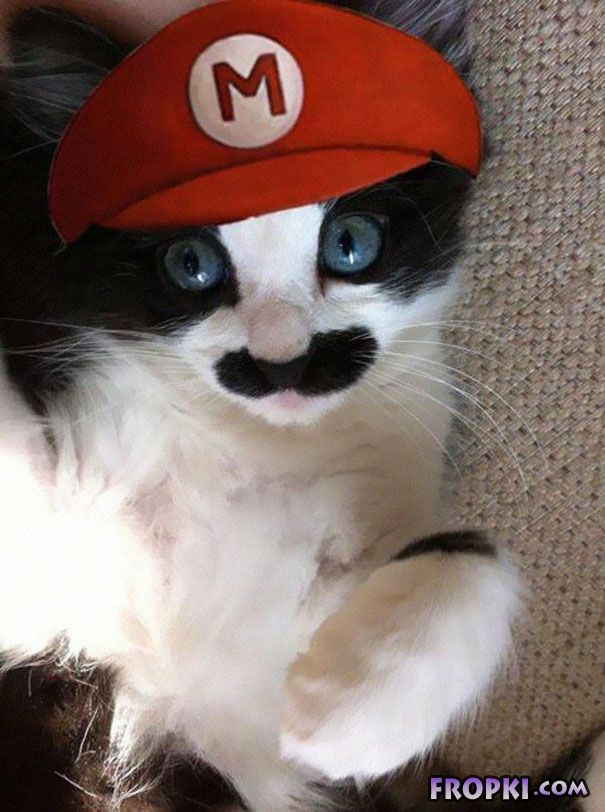 Funny and Creative Haloween Costumes for Pets