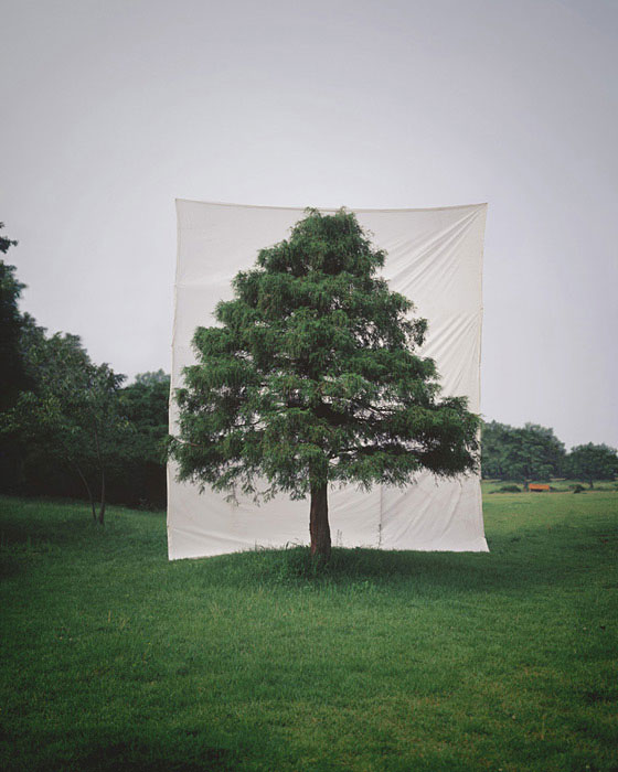 Canvas Backdrops Turn Actual Trees Into 2D Artworks