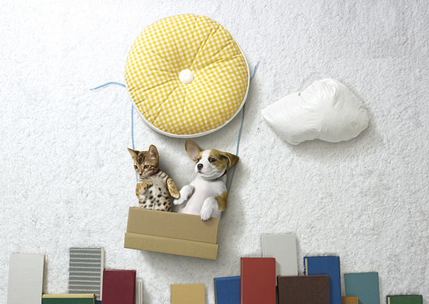 Puppies and Kittens have Imaginative Adventures