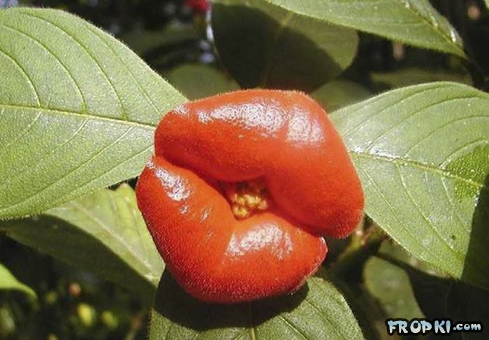 World's Most Kissable plant