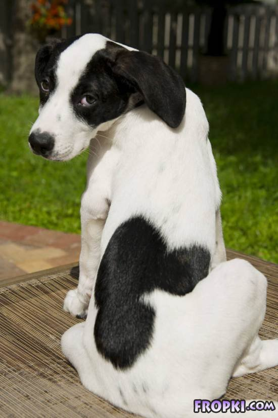 Adorable Animals With Unique Marks On Bodies