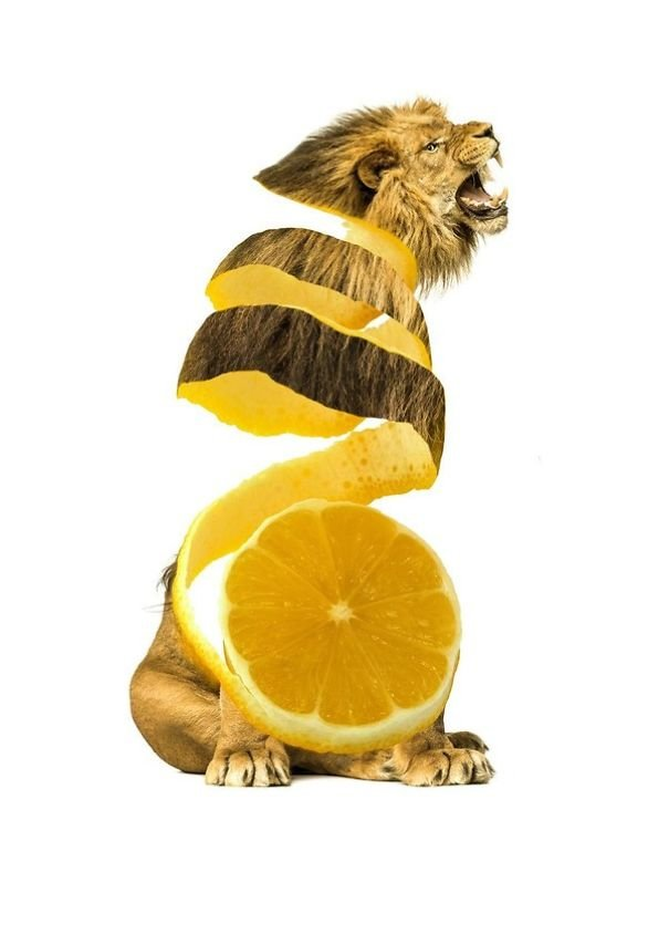 Animals Crossed With Fruits And Vegetables