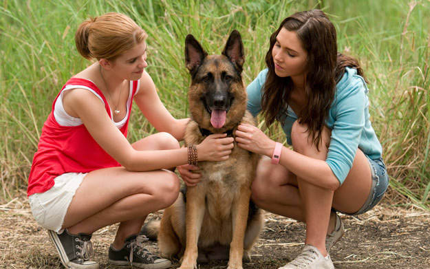 Charming Dogs Much Better At Picking Up Girls